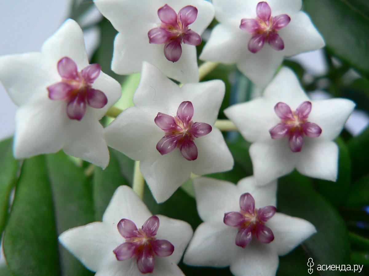 Фото экзотических комнатных цветов с названиями и