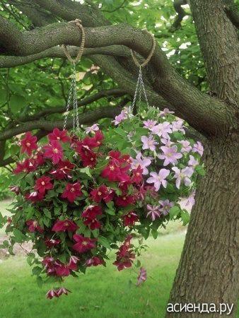 цветы комнатные фото и названия висячие